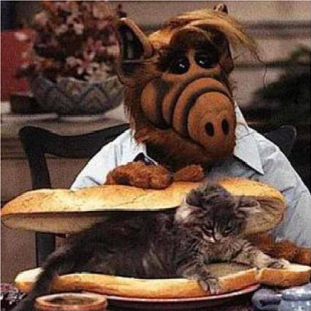Alf-Caption-this-1024x1024.jpg