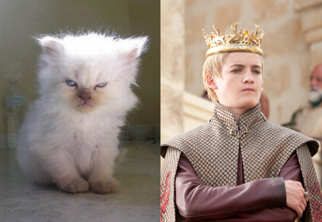 game-of-cats-joffrey